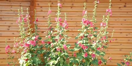 Boisdoré La vie en rose