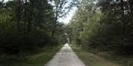 Forêt de Malvoisine
