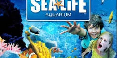Aquarium Sea Life