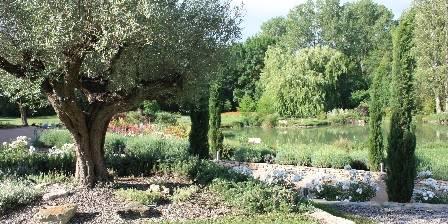 Au Chant des Sorgues Notre vieil olivier