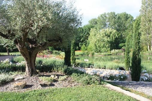 Chambre d'hote Vaucluse - Notre vieil olivier