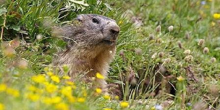 Gîte Chambon Marmotte