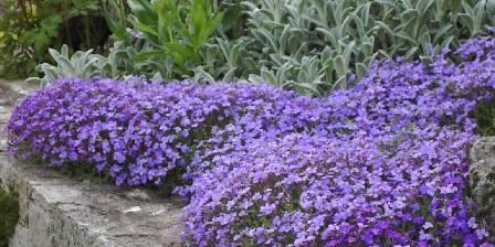 Le Jardin des Nosières Jardin au printemps
