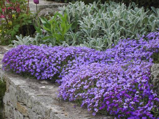Chambre d'hote Vendée - Jardin au printemps