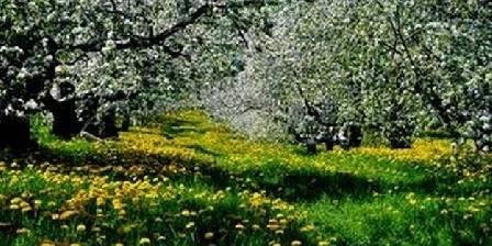 Les Salzards Verger au printemps