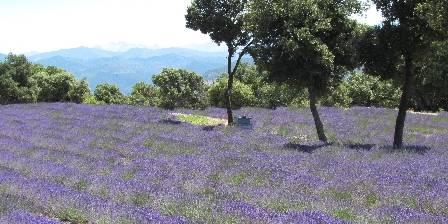 Maison d'hôtes Le Séminaire Lavender fields near Lurs