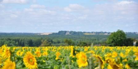 Domaine de Bourgville Vue du parc