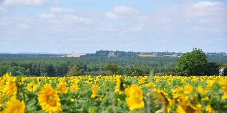 Domaine de Bourgville Vue du jardin