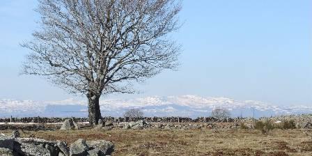 Air Aubrac Alpuech Vue sur le Lioran au printemps