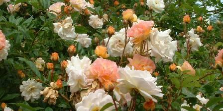 Gîte de La Roseraie Nos roses