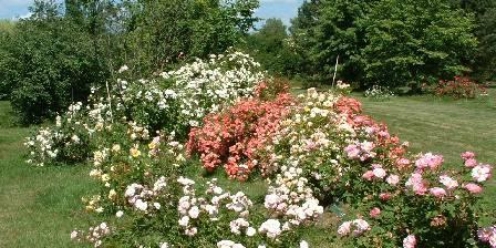 Gîte de La Roseraie Une allée de roses