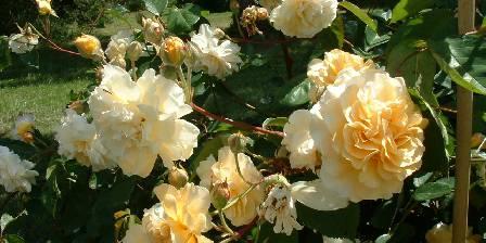 Gîte de La Roseraie Nous avons plus d'une centaine de variétés de roses