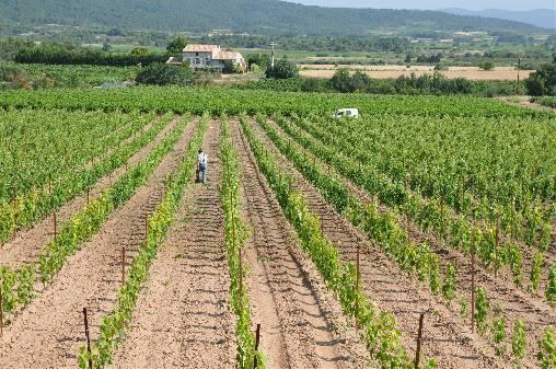 La chambre d'hôtes est située au milieu des vignes