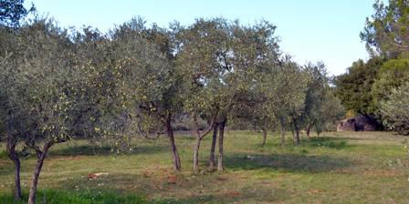 Chambres D'hotes Domaine de La Garrigue Parc avec 160 oliviers pour produire notre huile d'olive