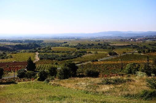 Parcours Découvertes: les vignobles des Terrasses du Larzac
