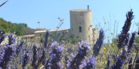 Château de La Gabelle Chambres d'hôtes dans les champs de lavande