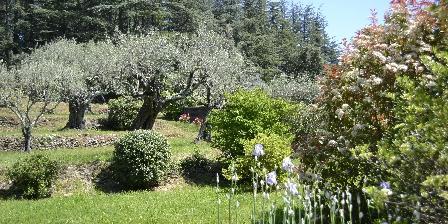 Les Oliviers Les Gîtes du Mas Bourret, olive and cedar trees