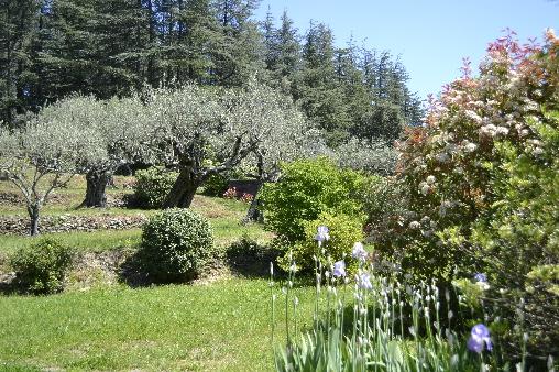 Les Gites du Mas Bourret, oliviers et cèdres