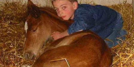 Ferme la Pichardière Ferme Equestre la Pichardière, Chambres d`Hôtes Ceton (61)