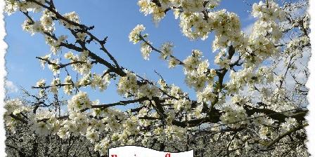 Maison du Pays de Serres Pruniers en fleurs