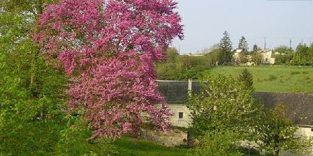 La Basinierre La Basinierre, Chambres d`Hôtes Candes Saint Martin (37)