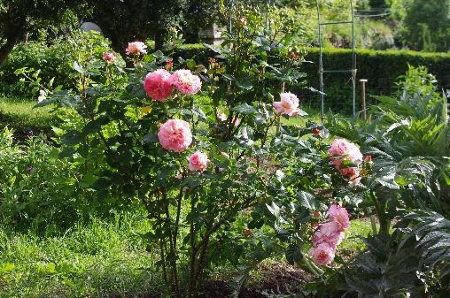 Chambre d'hote Aveyron - Potager et jardin plutôt sauvage devant le château