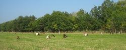 Ferienhauser La grange d'Ave