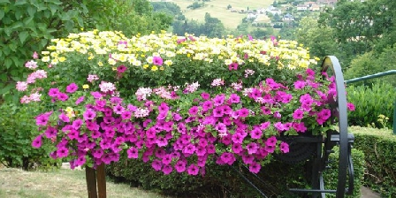 Le Gîte Fleuri Le Gîte Fleuri, Gîtes Haselbourg (57)