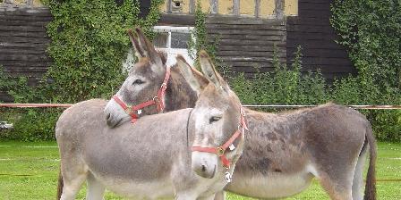 Les Clés d'Emeraude Randonnées avec ânes