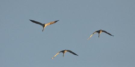 Les Clés d'Emeraude Observation des oiseaux et de la nature