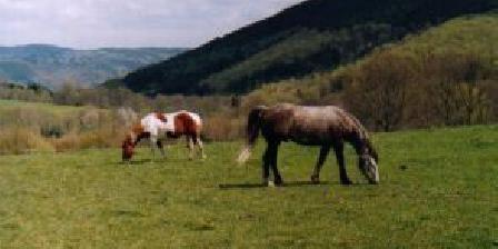 Ferme Equestre de Tréphy  Ferme Equestre de Tréphy - Tréphy Western Farm, Chambres d`Hôtes Chaumeil (19)