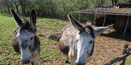 Domaine des Compouzines Our donkeys Penelope and Framboise