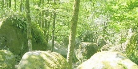 Les Abeilles des Monts de Blond Gîte rural des abeilles des Monts de Blond, Gîtes Javerdat (87)