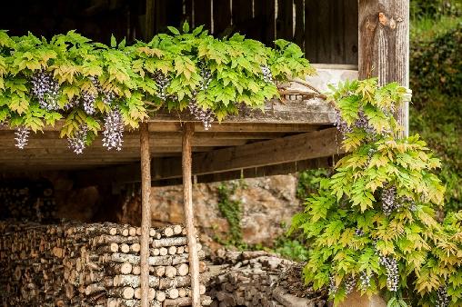 L'Ombrière au milieu de la nature