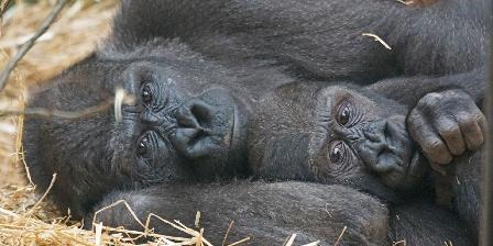 parc zoologique de St Martin la plaine