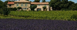 Bed and breakfast Ferme de Palumiane