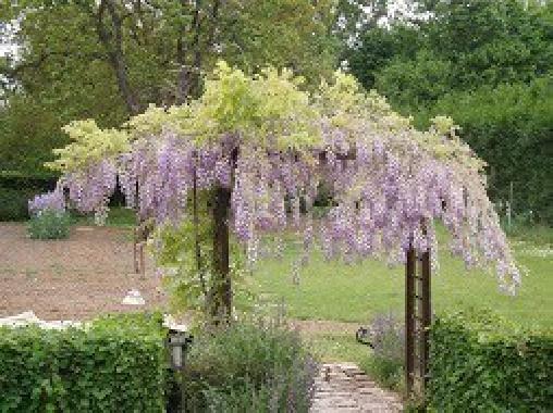 La Fontaine Aux Iris, Chambres d`Hôtes Hattencourt (80)