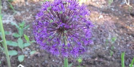 Le Mas L'Herbier Le Mas L'Herbier, Chambres d`Hôtes Le Cannet Des Maures (83)