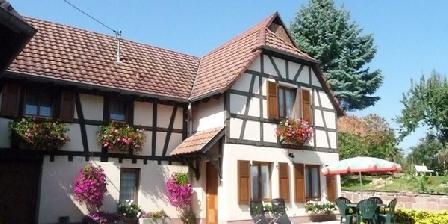 Gite Gîte Schehrer > Gite Route des Vins Près Obernai, Gîtes Bischoffsheim (67)