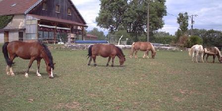 Relais Equestre de La Montnoirotte Relais Equestre de La Montnoirotte, Chambres d`Hôtes Crosey Le Petit (25)