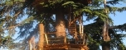 Chambre d'hotes Sur un Arbre Perché
