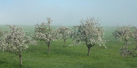 Domaine de L'Etre Pommiers en fleurs