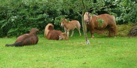 La Ferme de Kerhors La Ferme de Kerhors, Chambres d`Hôtes Tréméoc (29)