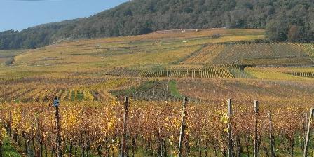Gîte-Halmer Le vignoble en automne