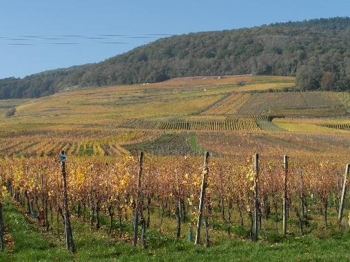 Le vignoble en automne