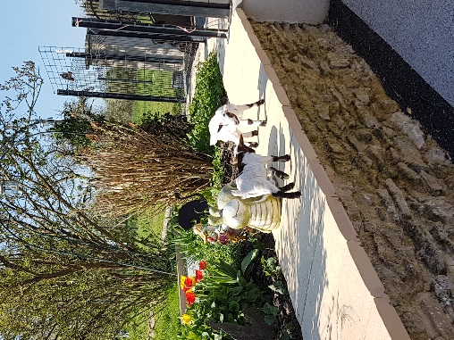chèvres naines mini-ferme gite ottonville