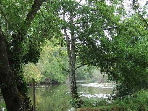 L'Eden, Chambres d`Hôtes La Boissiere Sur Evre (49)