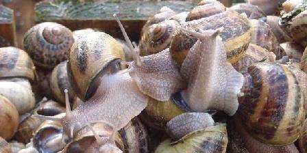 Escargots  Autrement ESCARGOTS AUTREMENT, Chambres d`Hôtes Thionne (03)