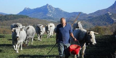 Chambre d'hotes Gîte de La Bastide > Nos vaches