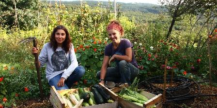 Chambre d'hotes Gîte de La Bastide > Les légumes de nos jardins